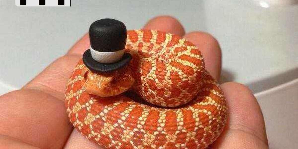 Estas pequeñas serpientes son tan adorables ¿no te parece?