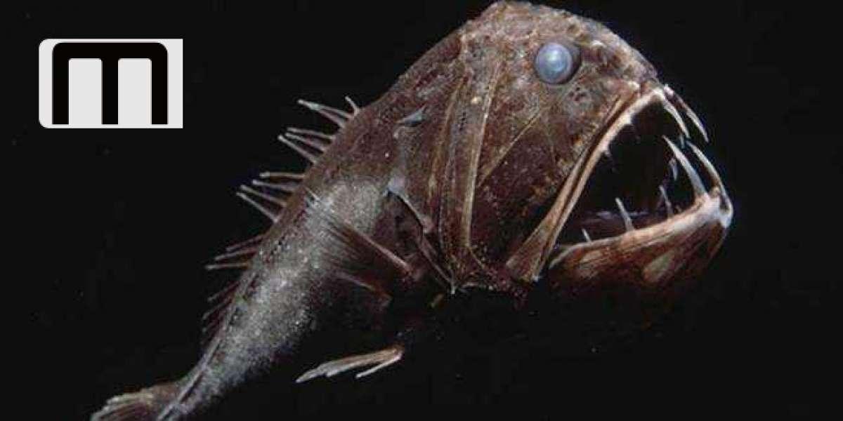 Estos asombrosos peces viven en lo más profundo del océano